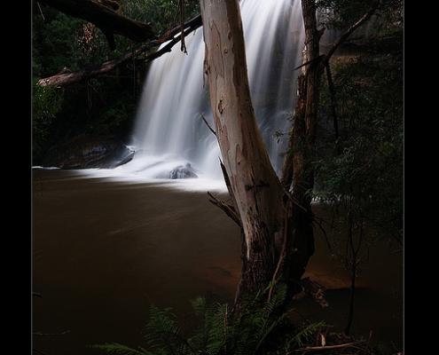otway waterfalls