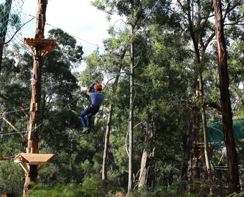 tree-adventure-otway-park-flying-foxes-kids-advent61