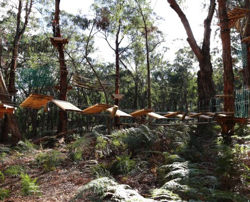 tree-adventure-otway-park-flying-foxes-kids-advent81