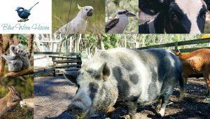 blue-wren-haven-otway-farm-stay